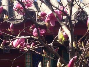 Bai Yun Guan